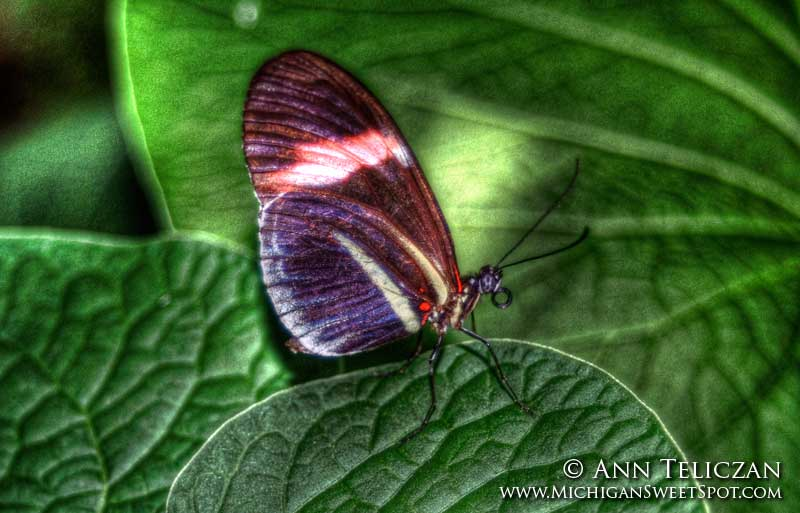 Butterfly sitting on a green leaf