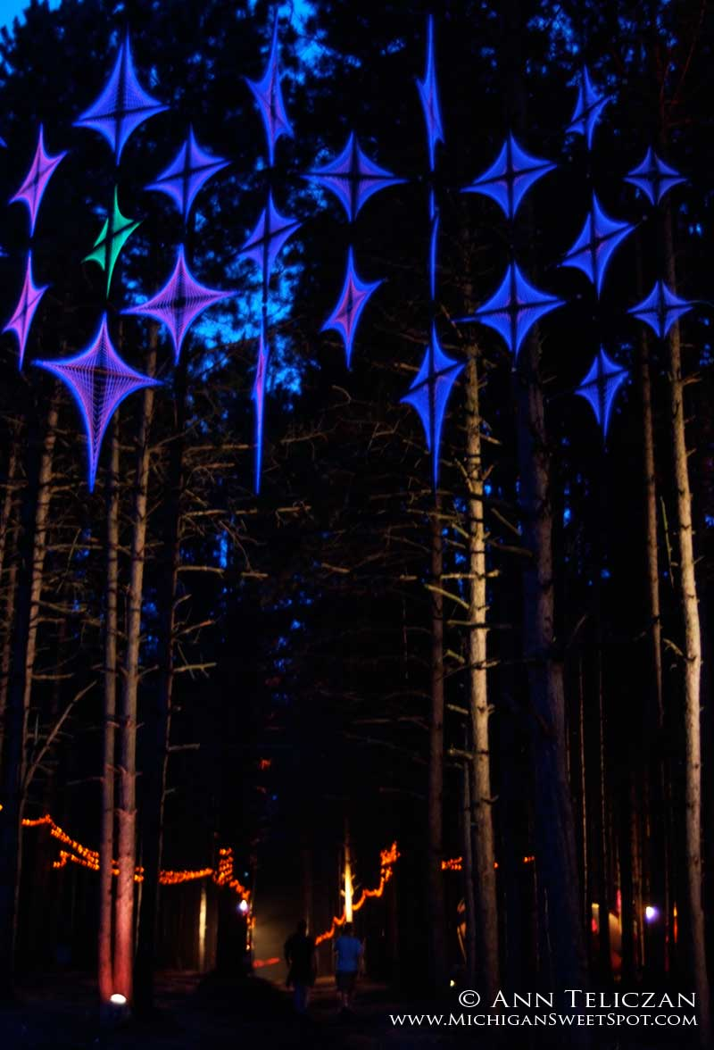 Rothbury's Sherwood Forest at Night