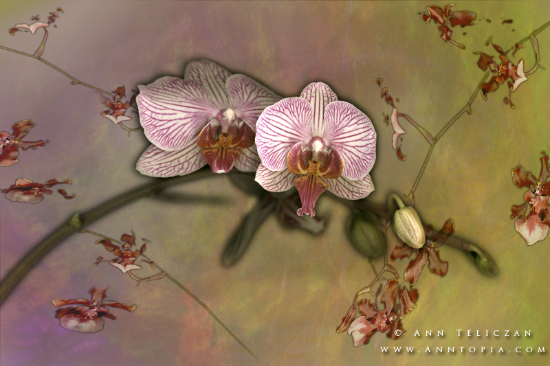 Frederik Meijer Gardens' Orchid Show